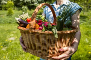 thumb basket with vegetables in the hands of a female farmer 5af47c9977e1e